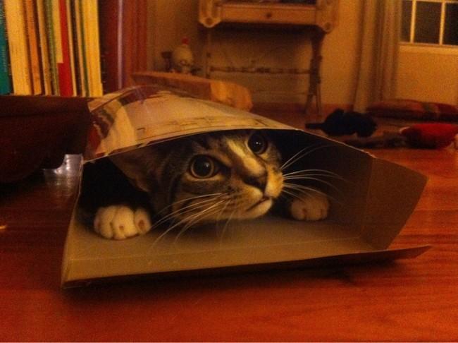 Коты в неожиданных местах фото 9
