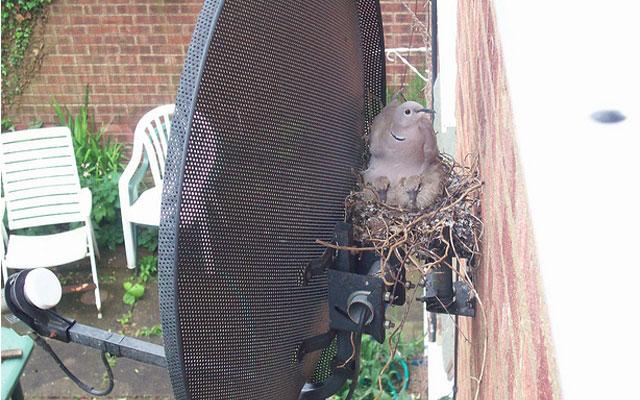 Необычные птичьи гнезда фото 10