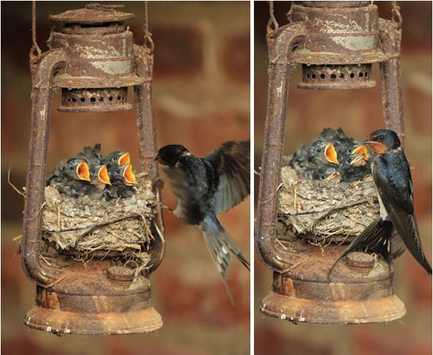 Необычные птичьи гнезда фото 2