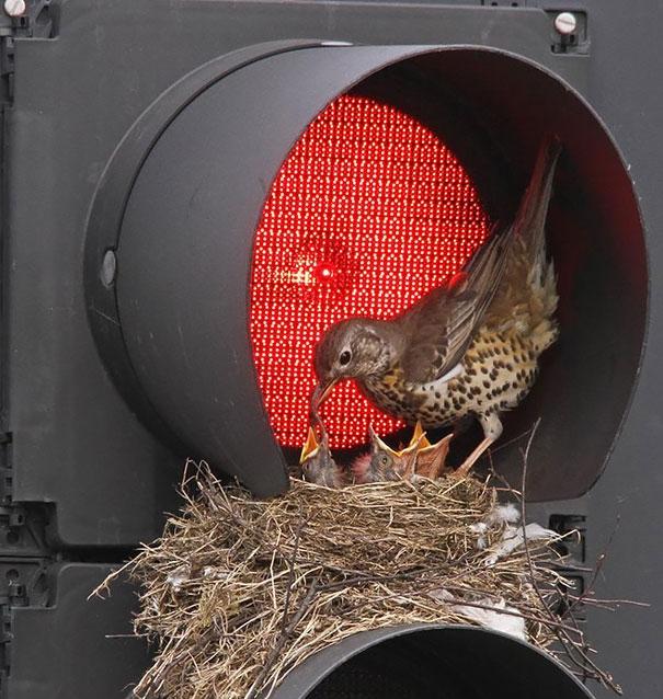 Необычные птичьи гнезда фото 4