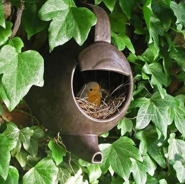 Необычные птичьи гнезда фото 5