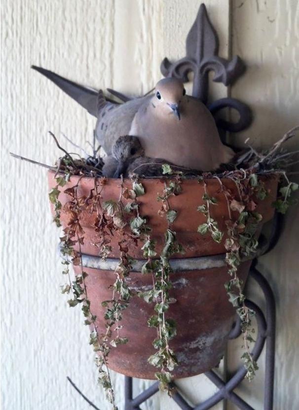 Необычные птичьи гнезда фото 6