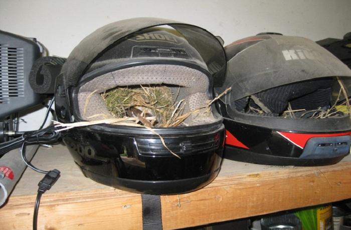 Необычные птичьи гнезда фото 7