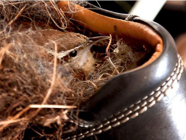 Необычные птичьи гнезда фото 8