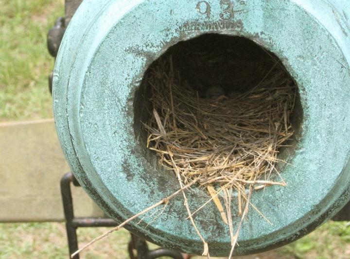 Необычные птичьи гнезда фото 9