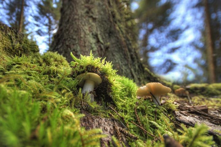 Интересные факты о грибах фото 2