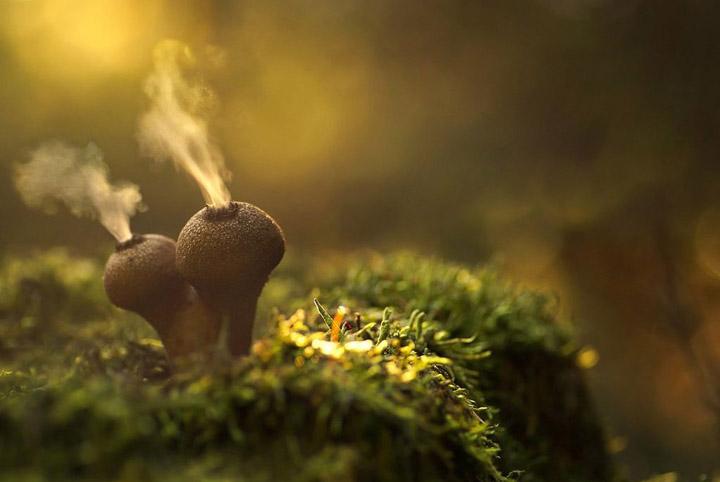 Увлекательные факты о грибах