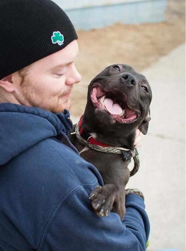 Счастливая собака фото