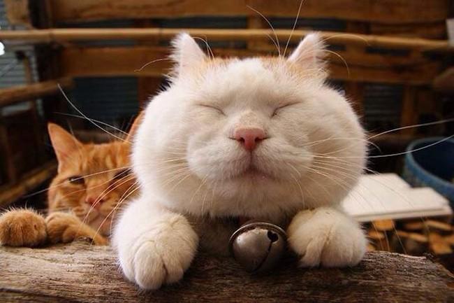 Счастливые животные фото 5