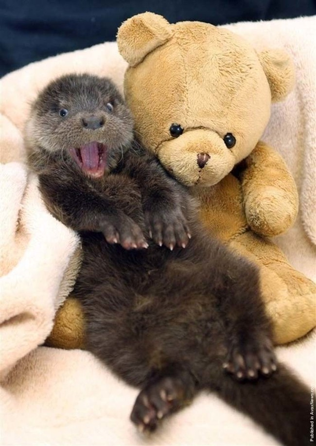 Позитивные улыбающиеся животные