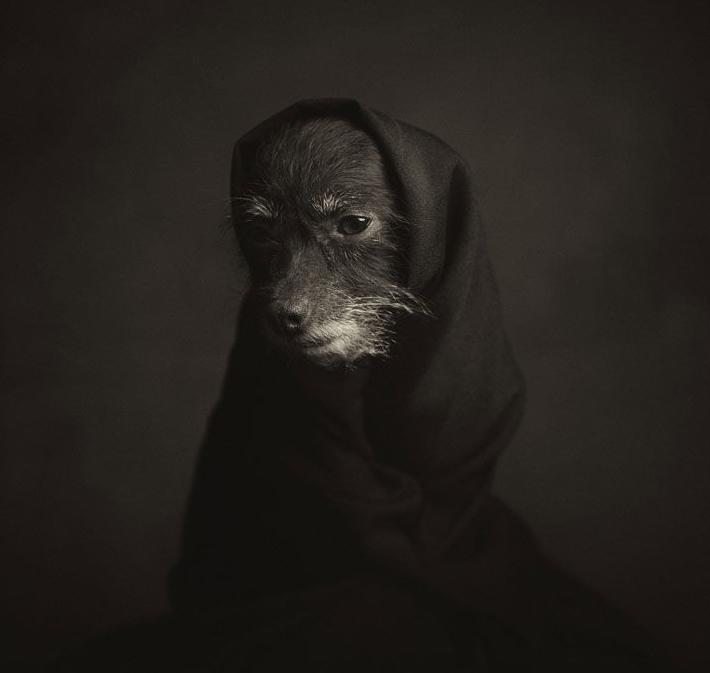 Животные как люди фото 3