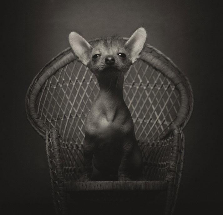 Животные как люди фото 6