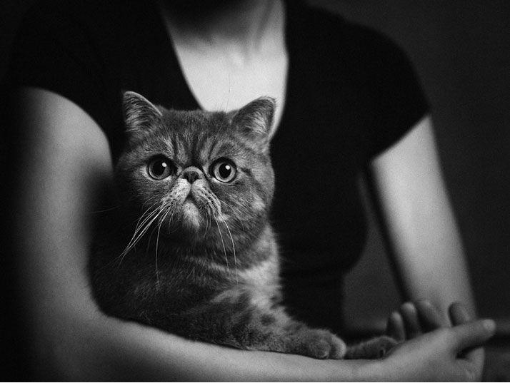 Животные как люди фото 7