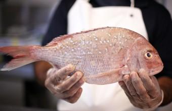 Диетологи опровергают полезные свойства рыбьего жира