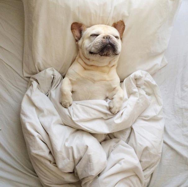 Собаки в постели фото 1