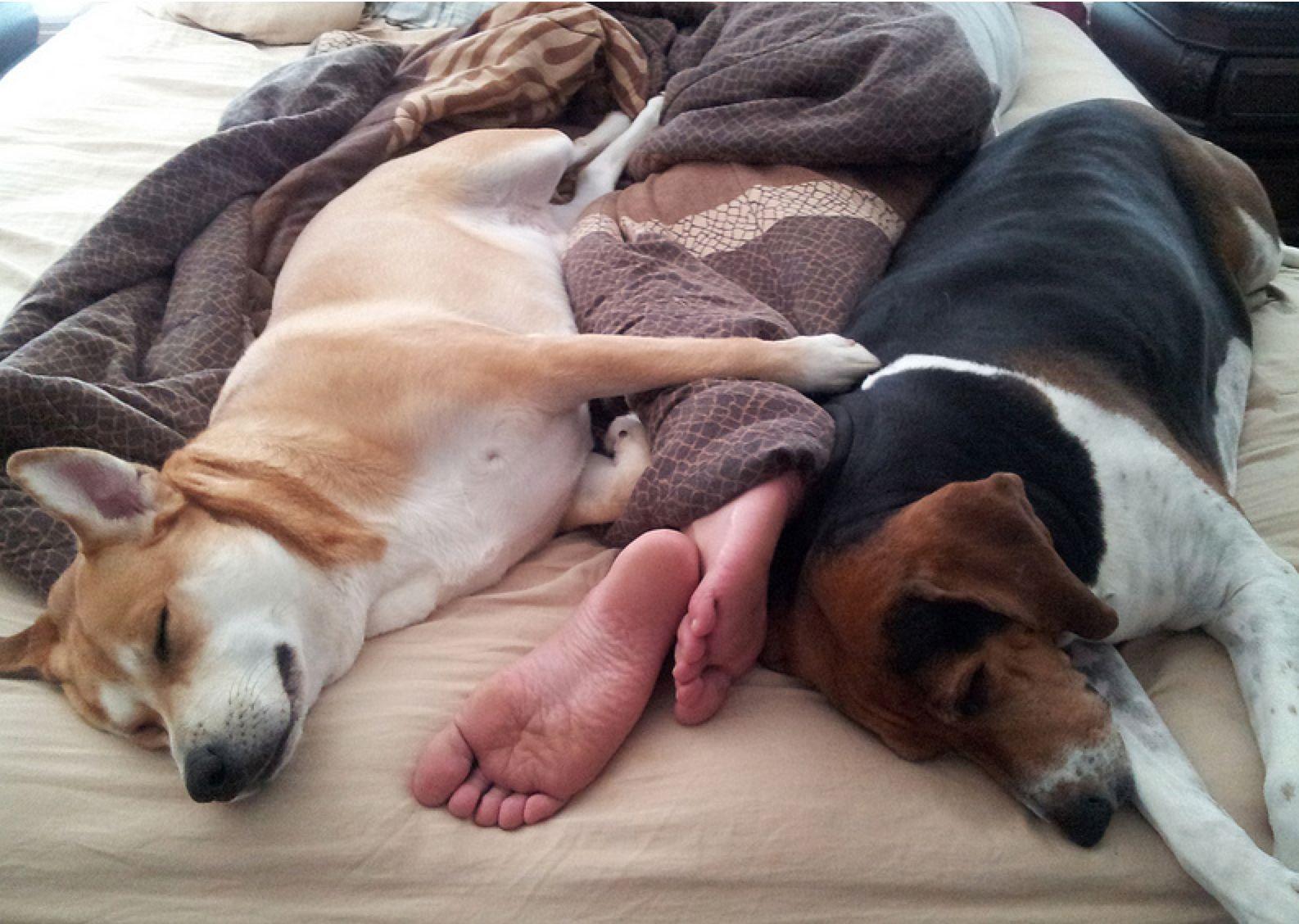 Собаки в постели фото 12