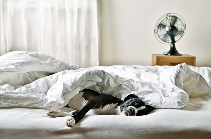 Собаки в постели фото 14