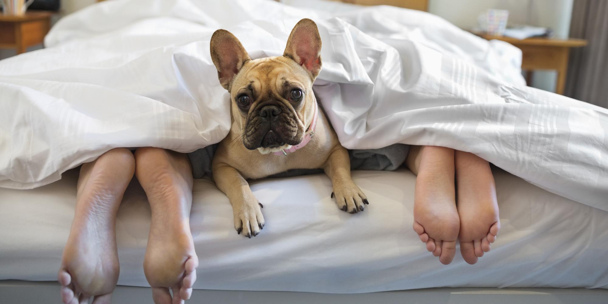 Собаки в постели фото 15