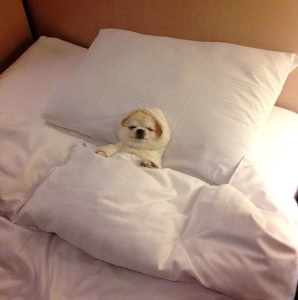 Собаки в постели фото 2