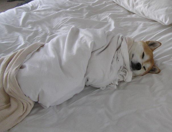 Собаки в постели фото 3