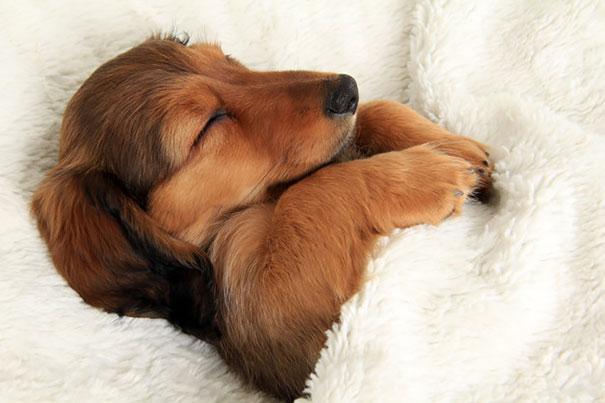 Собаки в постели фото 4