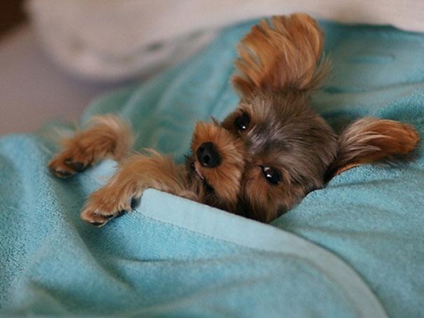 Собаки в постели фото 5