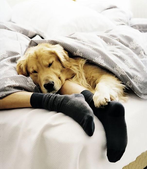 Собаки в постели фото 7
