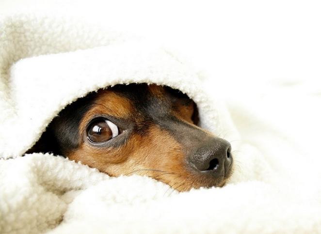 Собаки в постели фото 8