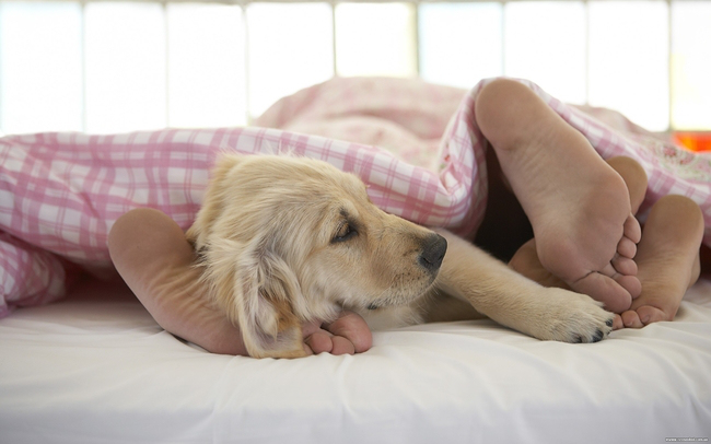 Собаки в постели фото 9