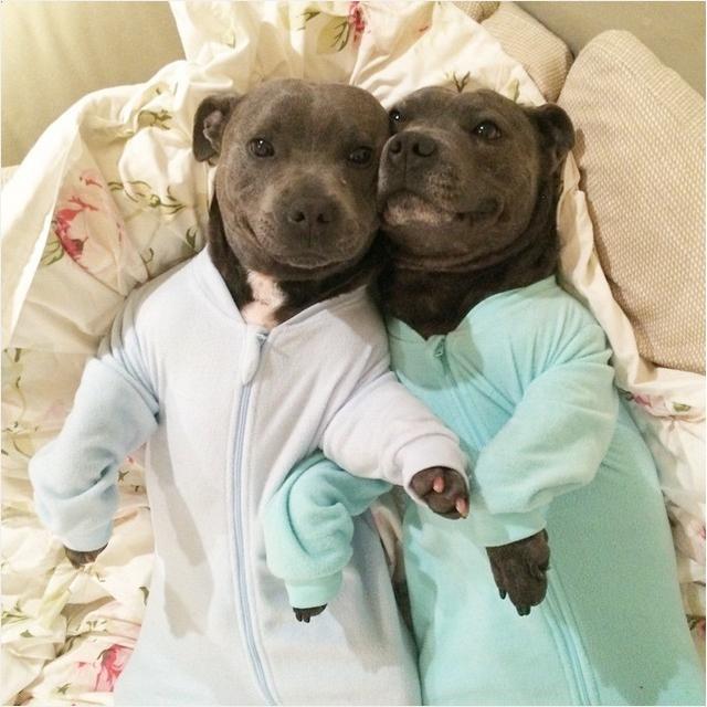 Собаки в пижамках фото 2