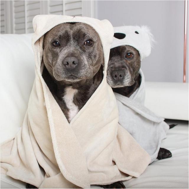 Собаки в одежде