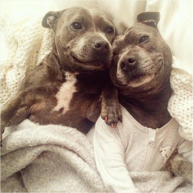 Собаки в одежде фото 2