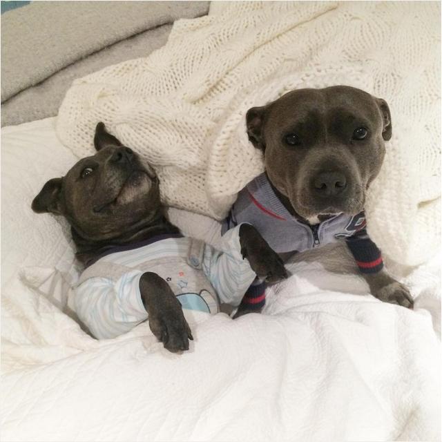 Собаки в одежде фото 3