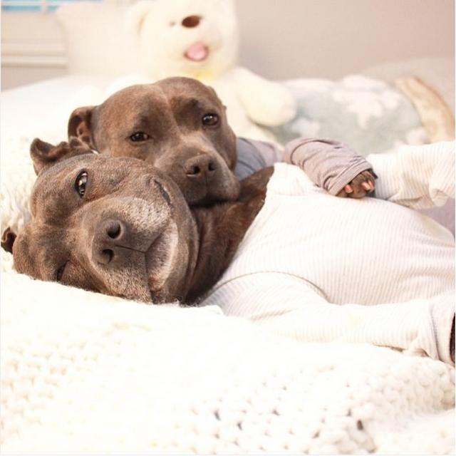 Собаки в одежде фото 4