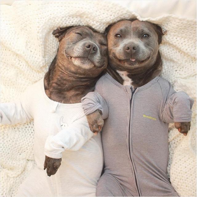 Собаки в одежде фото 6