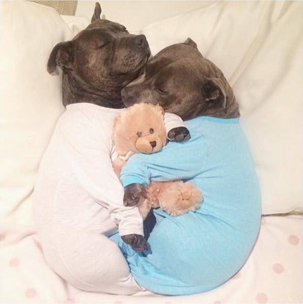 Собаки в пижамке