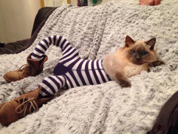 Коты в колготках фото 1