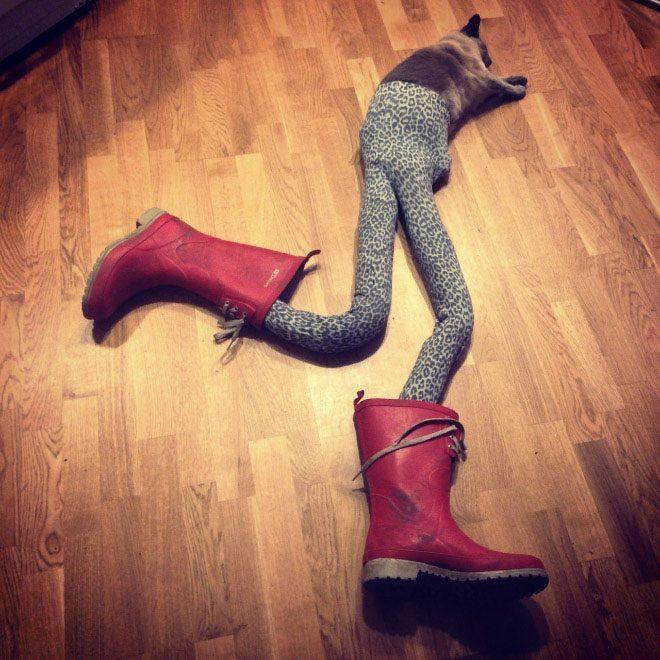 Коты в колготках фото 3