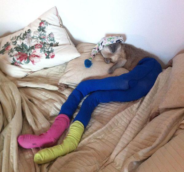 Коты в колготках фото 4