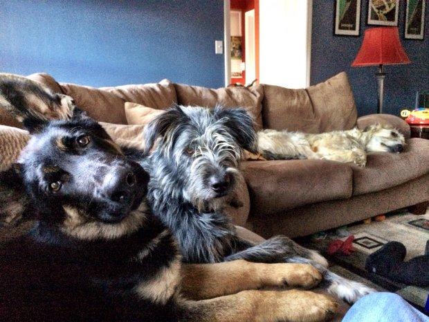 Собаки лежат на диване