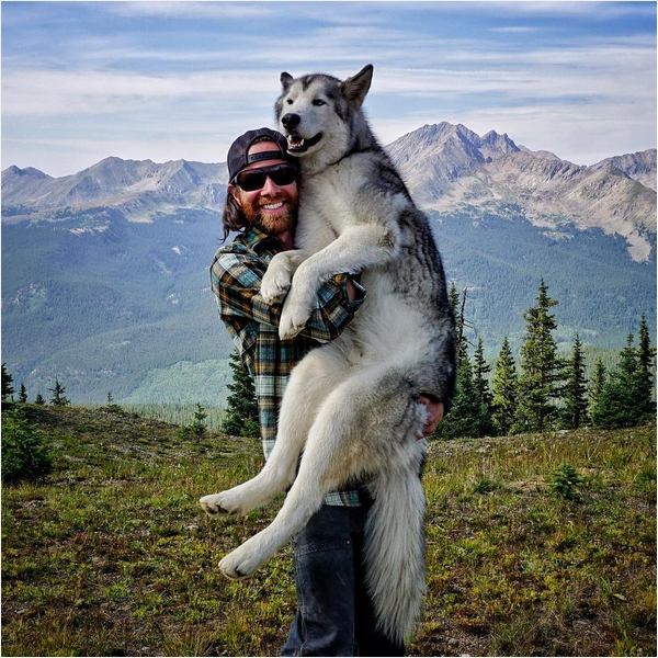 Собака Локи 3