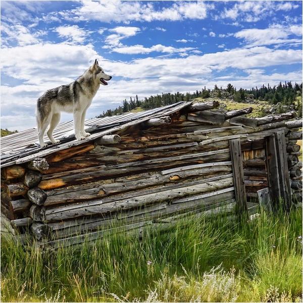 Собака Локи 6