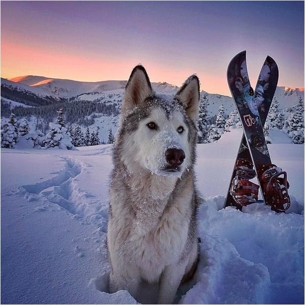 Собака Локи 8