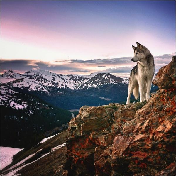 Собака Локи 9