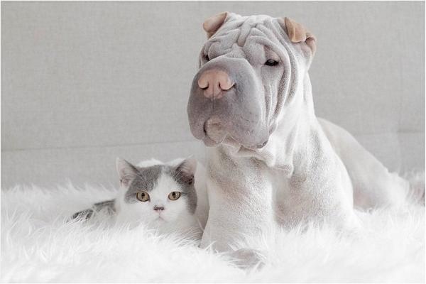 Собака Паддингтон и кот Батлер фото 2