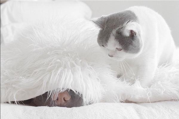 Собака Паддингтон и кот Батлер фото 3