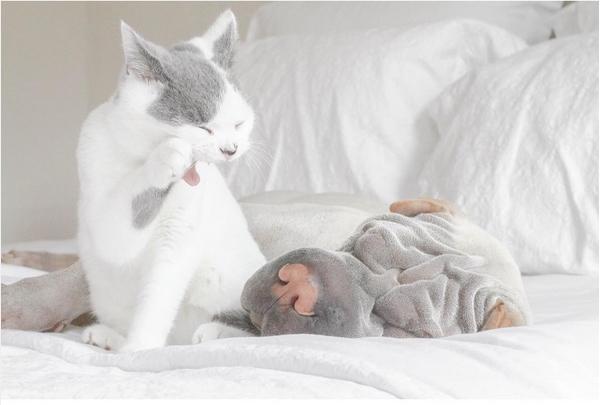 Собака Паддингтон и кот Батлер фото 4