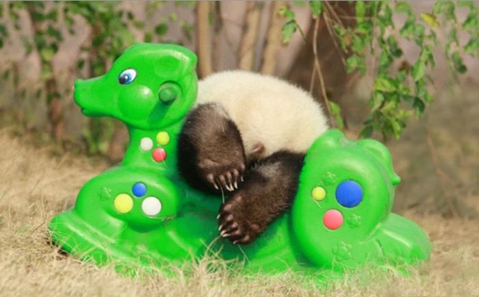 питомник для панд, фото 6
