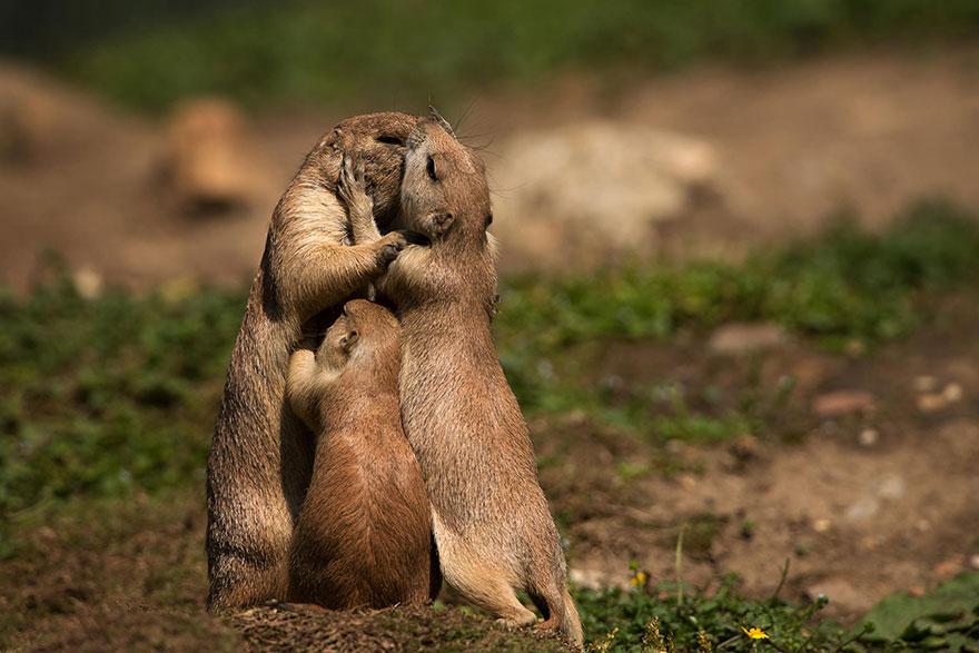 Животные и их дети 2