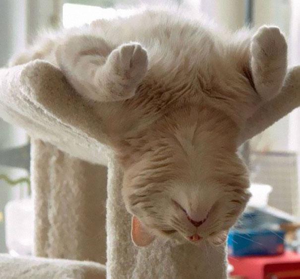 Коты, спящие в странных позах 3